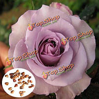 30шт светло-фиолетовый Роуз семена поделок домашнего декора сада