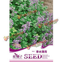 30шт семена Mentha зргсаШ SPEARMINT многолетних цветок