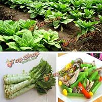 100шт зеленые семена спаржа салат огородный двухгодичной травы растения