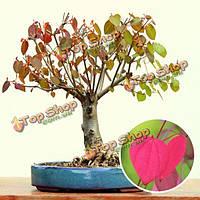 10шт сада церцидифиллюм japonicum семян газон двор лиственное дерево завод