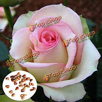 50шт розовый белые розы семена DIY дома сад разл