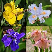 Смесь 100шт семена цветов ириса цветник балкон многолетние травы декоративное растение
