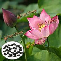 10шт светло-розовый миску семена лотоса