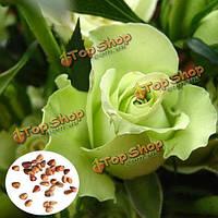 50шт зеленые розы семена DIY дома сад разл