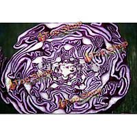 20шт реликвия органических вкус овощей фруктов семян цветной капусты фиолетовый
