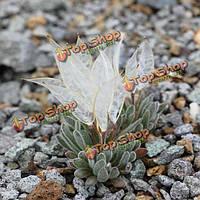 150шт daggerpod сад семена суккулентных растений горшечная