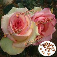50шт желтый красная роза Семена DIY Главная Сад декабрь
