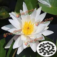 10шт Nymphaea gonnere лотоса Семена Сад белый лотос водной Растение