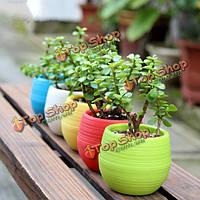 Мини разноцветные круглые сочные цветочный горшок сада Office для дома декор