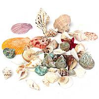 Морские ракушки смесь для декора