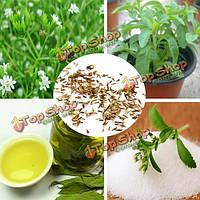 50шт ребаудиозидов семена сладких листьев стевия натуральный подсластитель