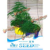 6 семян частицы Спаржа папоротника семена setose спаржи небольшие бамбуковые растения