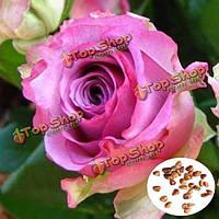 50шт фиолетовый красная роза Семена DIY Главная Сад декабрь