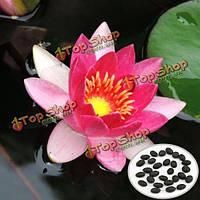 10шт Nymphaea солнце принцесса семена лотоса Сад красная водяная лилия Растение