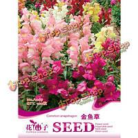 100шт семена зев зев Мажус красный розовый многоцветная