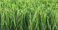 Искусственная трава Nature D3 (мультиспорт-50мм.)
