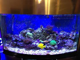 Cветодиодная фитопанель для аквариума 60W, фото 2