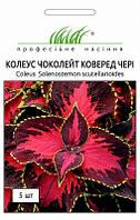 Семена цветов колеус Чоколейт Коверед Черри 5 семян Профессиональные семена