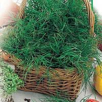 Семена укропа Салют на вес от производителя