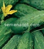 Весовые семена Огурца Аист