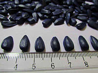 Семена подсолнечника Гибрид - Ясон F1