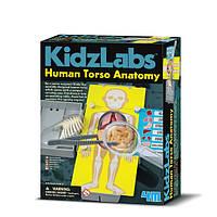 Научные опыты Анатомия человеческого торса
