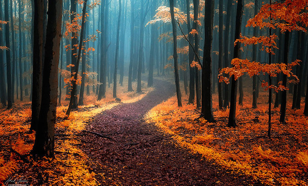 Гироскутер и осень: да они созданы друг для друга!
