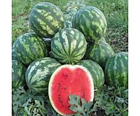 Cорт Сид Зеро F1 новый гибрид бессемянного арбуза с плодами овальной формы и хрустящей сладкой мякотью