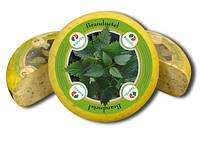 """Сыр """"Ручелло"""" с крапивой Ruscello Brandnetel"""