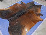 Шкура шоколадного кольору з рудими боками в інтер'єр, фото 2