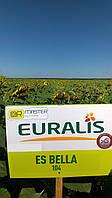 Семена подсолнечника ЕС Белла компании Евралис A-G