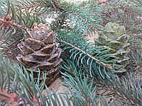 Натуральное мыло Шишка, фото 1
