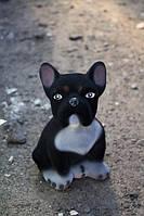 Французский бульдог щенок