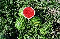 Арбуз Крисби F1 ультра ранний гибрид типа Крымсон округлой формы и полосатыми плодами массой до 10 кг