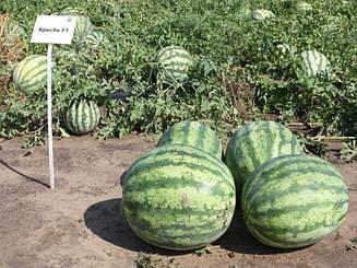 Арбуз Крисби F1 ранний гибрид округлой формы и полосатыми плодами  1 000 семян