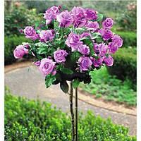 Штамбовая роза Фиолетовая