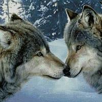 Алмазная вышивка Любовь волков KLN 30 х 40 см (арт. FS252)