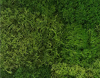 "Декоративный мох ""Лесной"" 1 м2, фото 1"