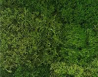"""Декоративный мох """"Лесной"""" 1 м2"""