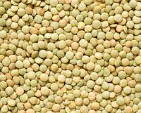 Чечевица зеленая крупная 300 г(можно для проращивания)