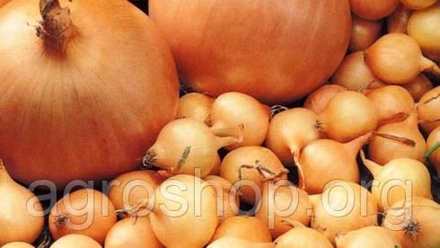 Семена лука Шекспир 1 кг.