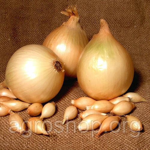 Семена лука Стурон (длинный) 1 кг.