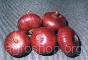 Семена лука Мавка 1 кг.