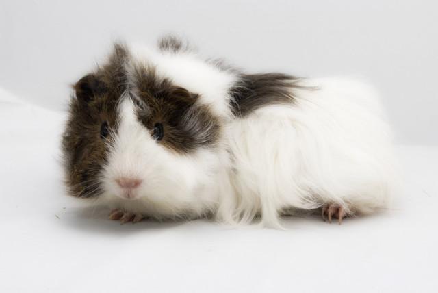 Ferplast DUNA MULTY Клетка для кроликов и морских свинок
