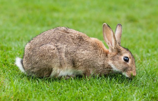Ferplast CAVIE 100 DELUXE Клетка для кроликов