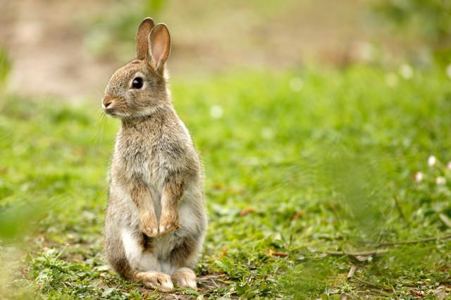Ferplast GRAND LODGE PLUS Вольер для кролика