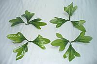 Листочек хризантемы, 12 см, немятый, фото 1
