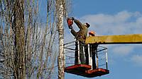 Кронированию деревьев - Омолаживающая обрезка