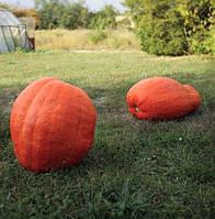 ГОЛИАШ - семена тыквы, 500 грамм, SEMO
