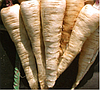 ДЛИННЫЙ БЕЛЫЙ - семена пастернака, 1 кг., SEMO